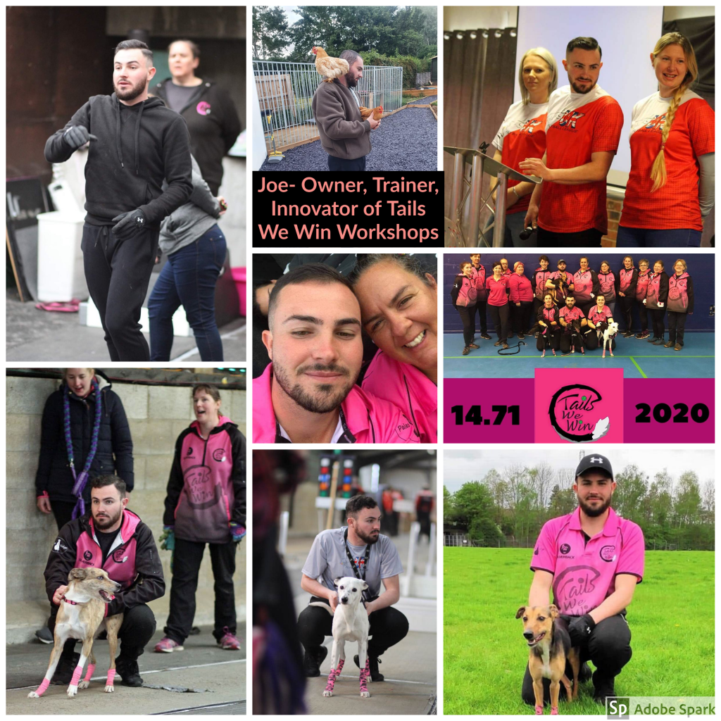 Collage of Joe Lamont and dogs he has trained